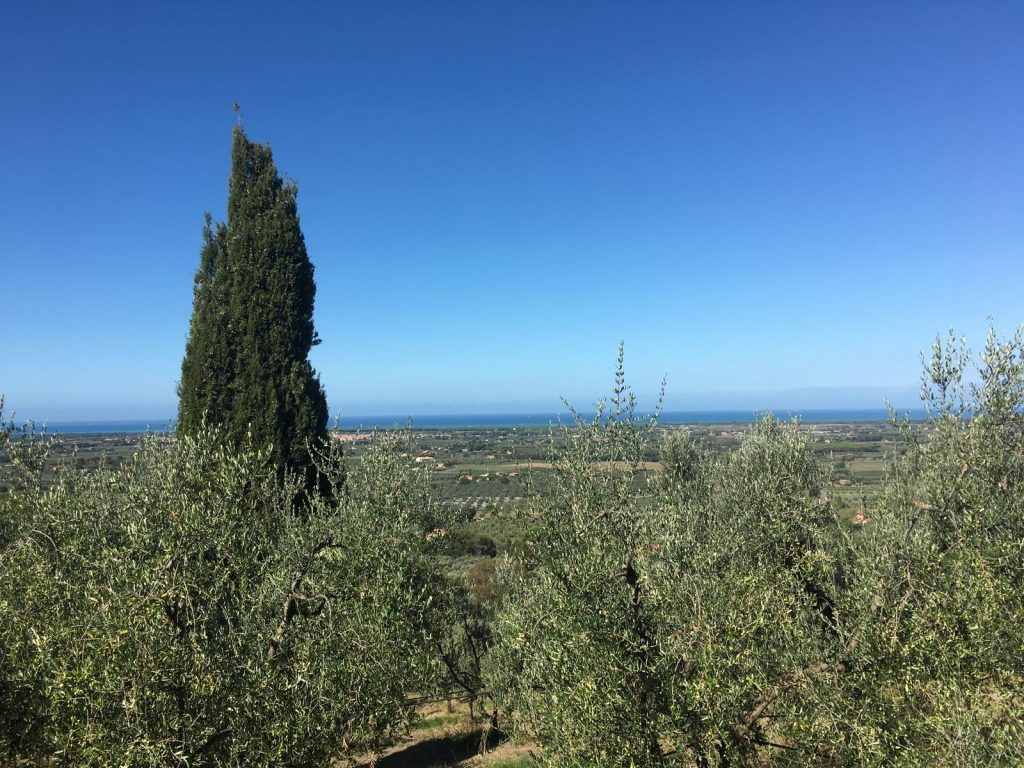 olive grove luncheon